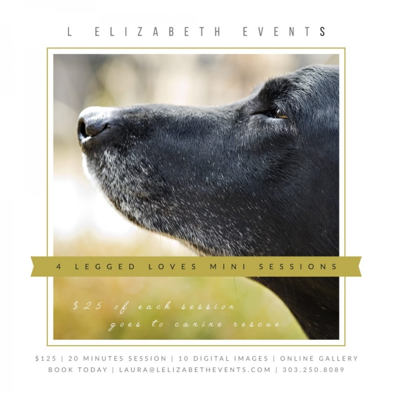 Black Lab, Senior Dog, Pet Portrait Sessions