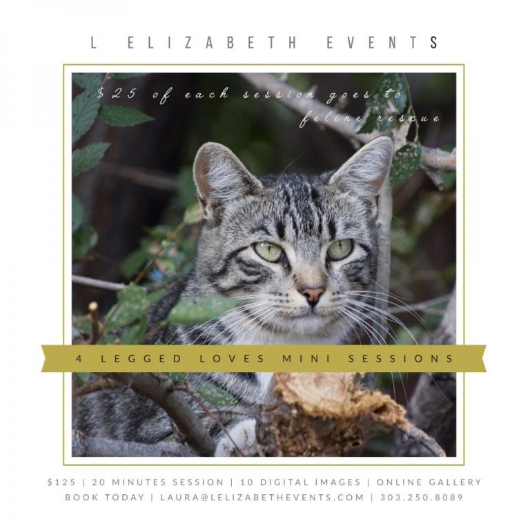 Cat, Kitten, Mini Portrait Sessions